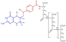 Biosynthesis of vitamin B9 in plants. Applications